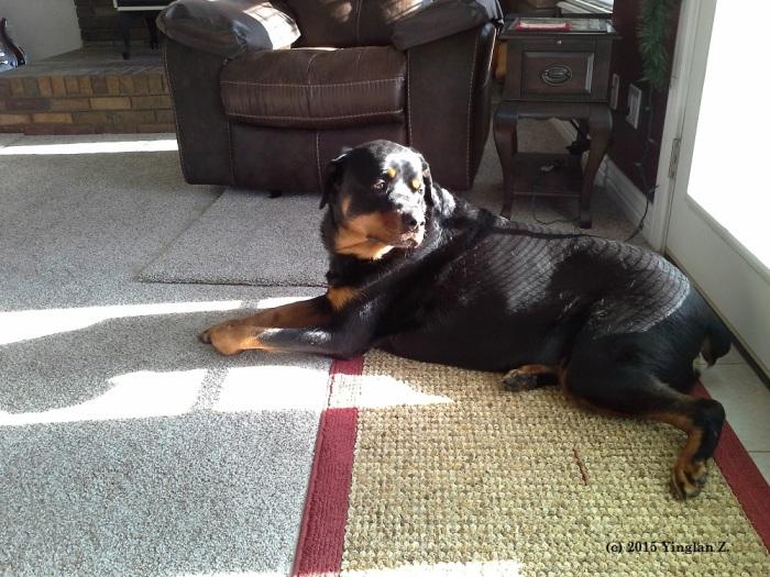 Lucy, My mom's friend's big dog