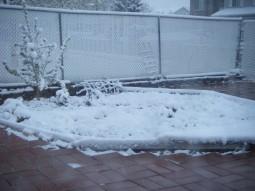Spring Snow. Extraordinary, isn't it?