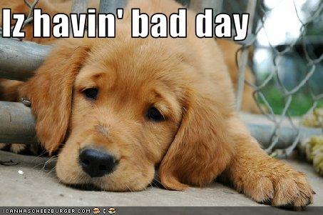 baddaydog