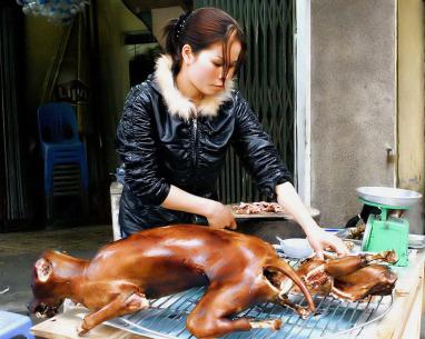 korea-dog-meat