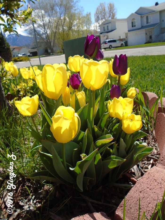 vibrant-flowers-1