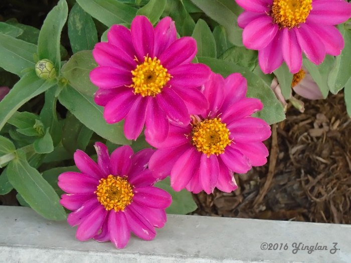 vibrant-flowers