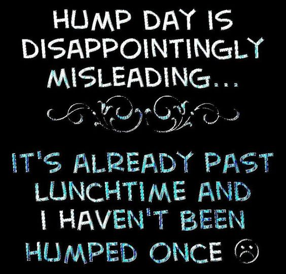 hump-day-humor-1