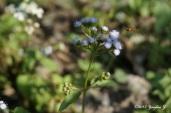 macro-bee-and-flower