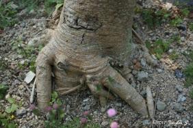 tree-trunk-1