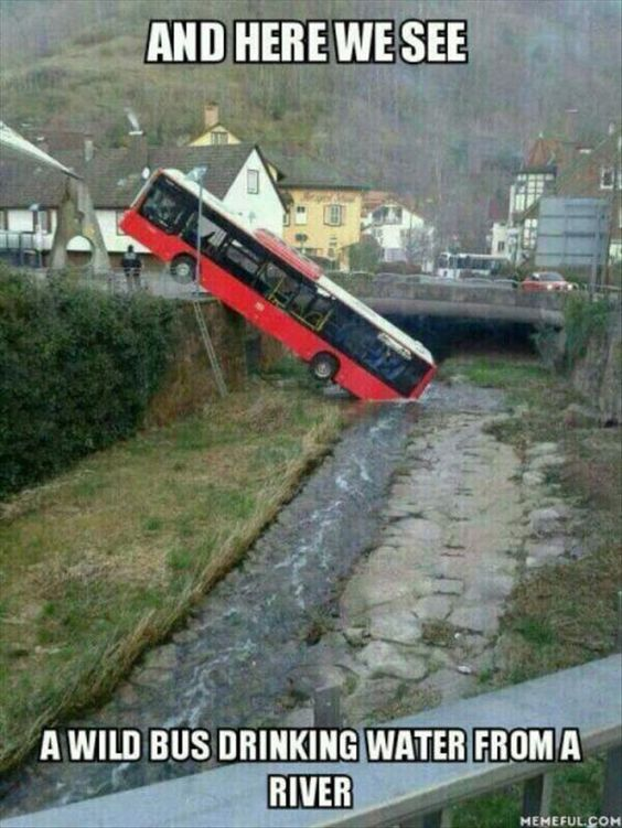 bus-funny
