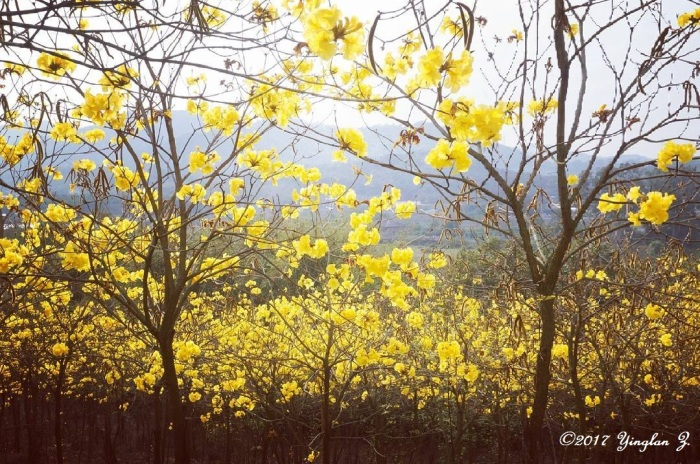 yellow-flower-1