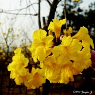 Beautiful yellow flowers from the man-made forest