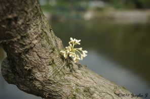 Branch with Flower