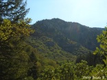 Coldwater Canyon 1