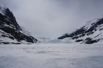 Columbia Icefield (up close)