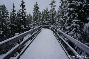 Yellowstone road 2