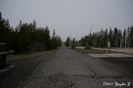 Yellowstone road 4
