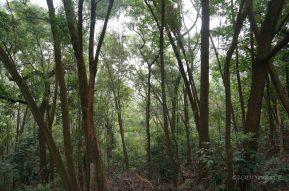 Zhongshan Forest Park