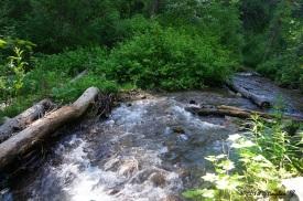 Wheeler Creek 15