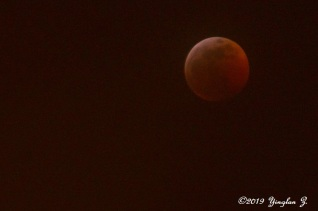 Blood Moon in January 2019