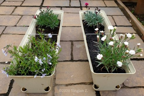 Clockwise starting upper left: Pinks, Red Dianthus, Pinkish-white dianthus, and Purple Phlox