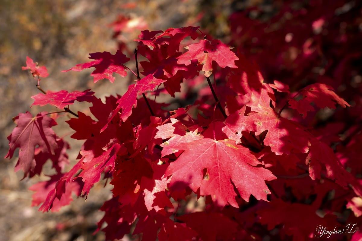 Lens-Artists Photo Challenge #167: Colors of Autumn